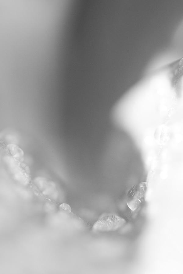 30Mrz2011_0016
