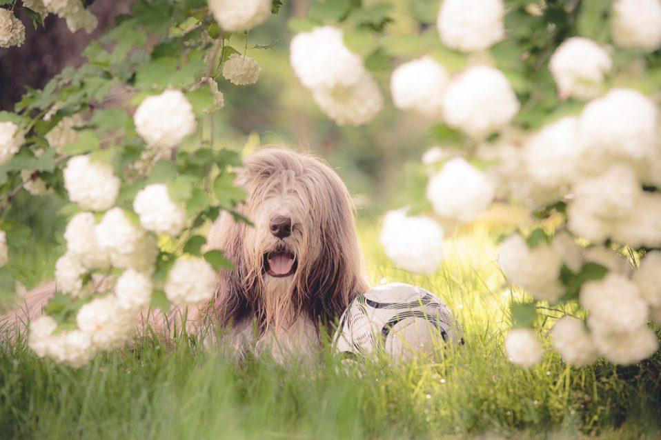 Hund mit Teleobjektiv fotografiert