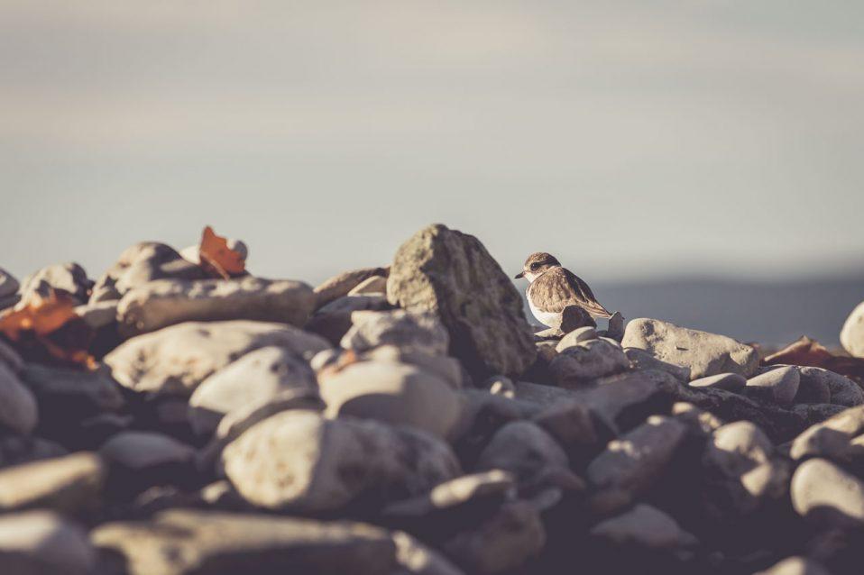 Welches Objektiv für Vogelfotografie