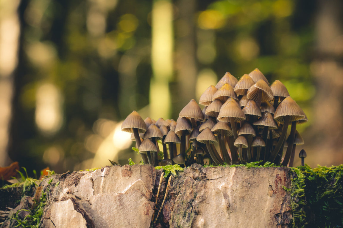 Makroaufnahme Pilze