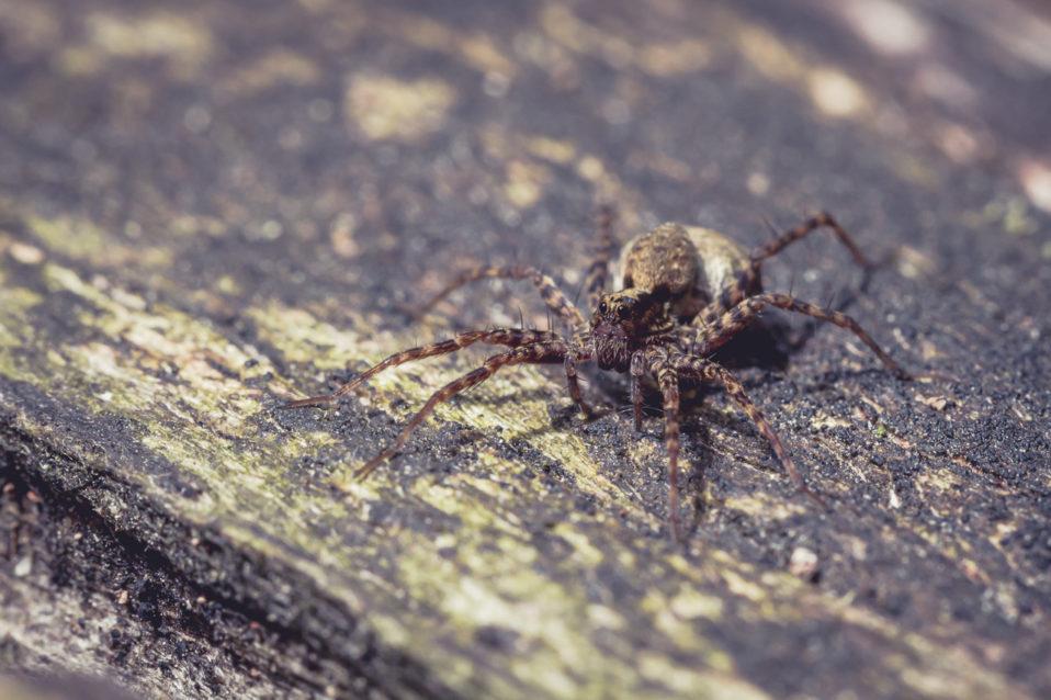 Makroaufnahme: Spinne sitzt auf Holz