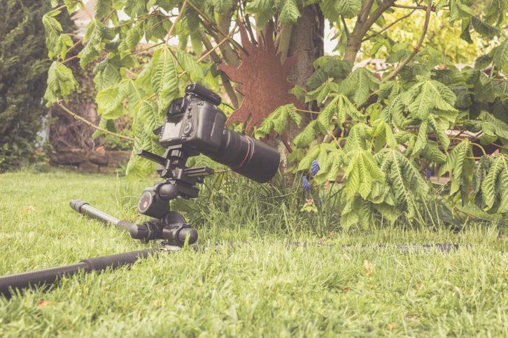 Makrofotos vom Stativ