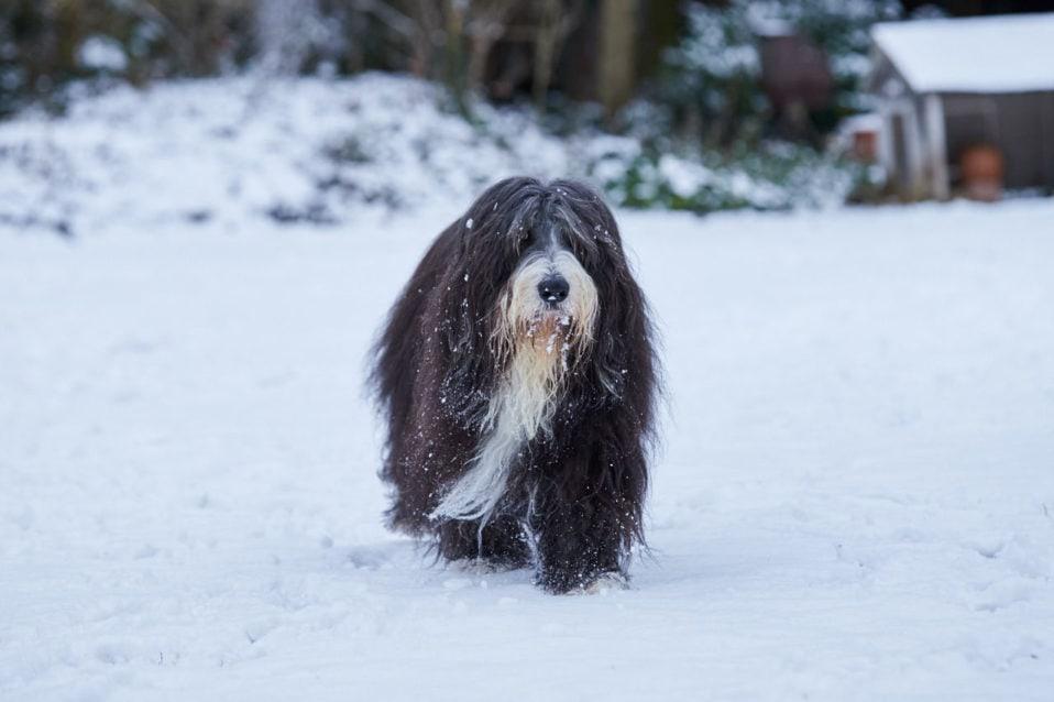 schwarzer Hund in weißem Schnee