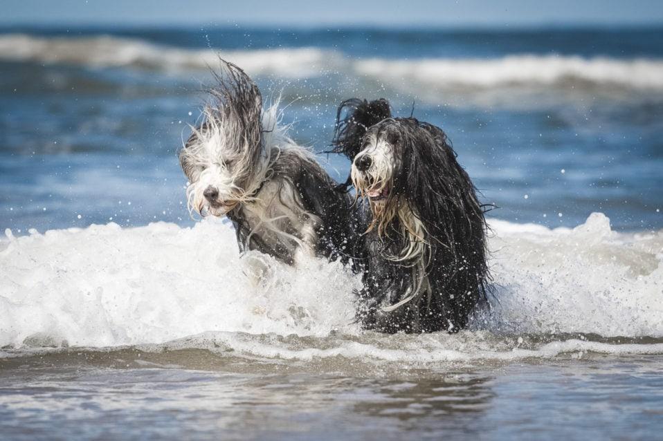 Hunde in Bewegung am Meer